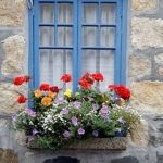 Perfect Shade Plants for Windows Boxes 57