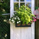 Perfect Shade Plants for Windows Boxes 60