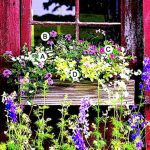 Perfect Shade Plants for Windows Boxes 61
