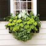 Perfect Shade Plants for Windows Boxes 69