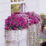 Perfect Shade Plants for Windows Boxes 8