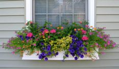 Perfect Shade Plants for Windows Boxes 80