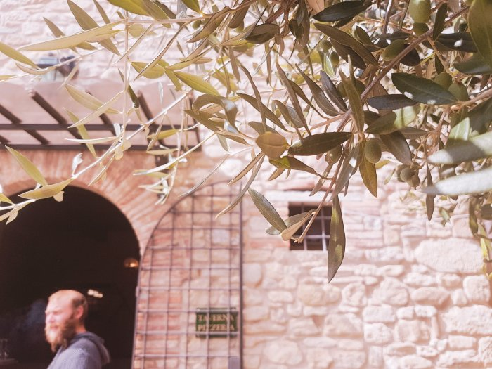 Henry and an olive tree-Umbria-Romantic-destinations-europe-alternative-holidays-hoopla-adventures