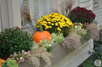 Fall Outdoor Decorating: Window Boxes