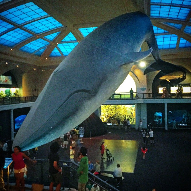 Natural history whale