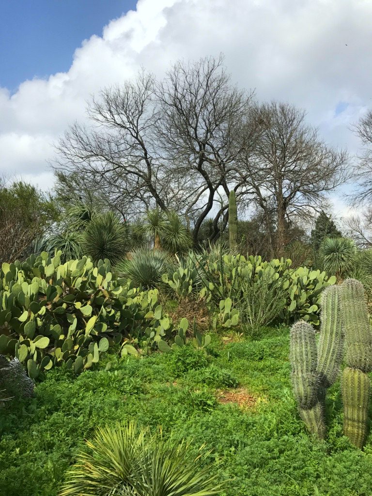 Near The End Of The Cactus And Succulent Garden We Happened Upon The South  Texas Trail. Here We Found This Adorable Adobe House, More Cacti, ...
