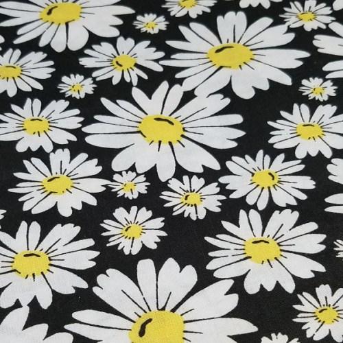 daisies_black_bg