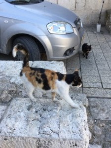 Cats in Jerusalem copy