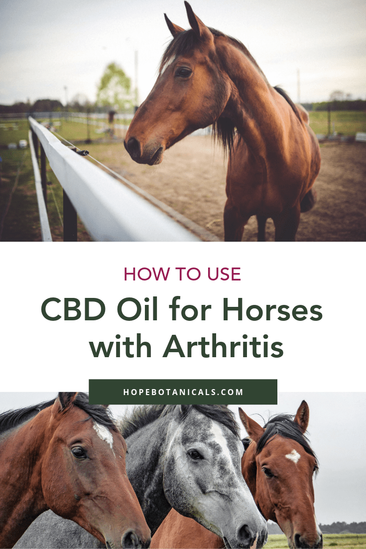 Tips for how to use cbd oil for horses with arthritis