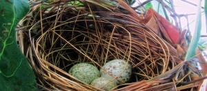 cropped-nest-e1444764934970.jpg