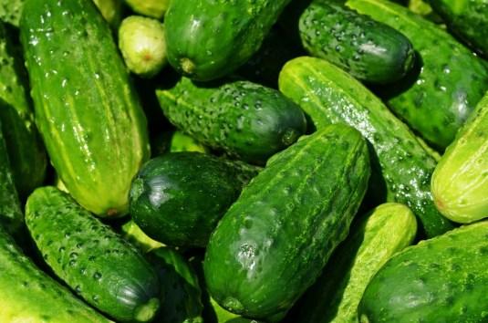 cucumbers-849269_1280