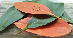five minute friday: five