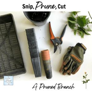 Snip Prune Cut
