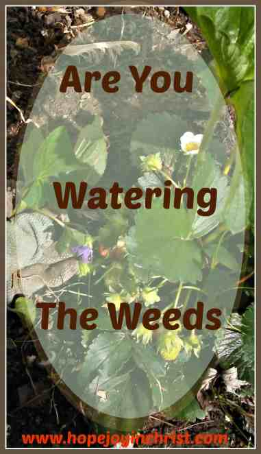 Watering the Weeds in God's Garden