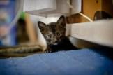 gatinhos-1