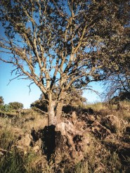 Un arbolito vela a su padre muerto // A tree mourns it's dead father