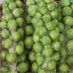 Brussels Sprouts 'Jade Cross'