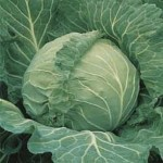 Cabbage 'Coppenhagen'