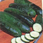 Cucumber 'Marketmore'