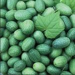 Cucumber 'Mexican Sour Gherkin'