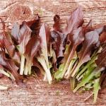 Lettuce 'Royal Red Oakleaf'