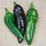 Pepper 'Anaheim'