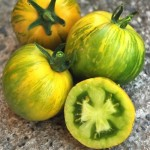 Tomato 'Green