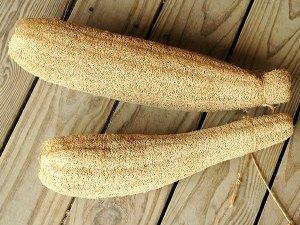 Gourd 'Luffa'