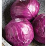 Cabbage, 'Ruby Perfection'