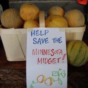 Melon - Minnesota Midget | Organic |