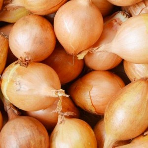Onion - Sturon