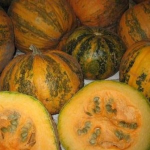 Pumpkin - Lady Godiva | Organic |