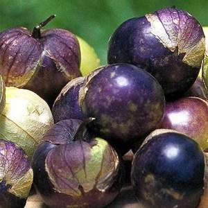 Tomatillo - Purple | Organic |