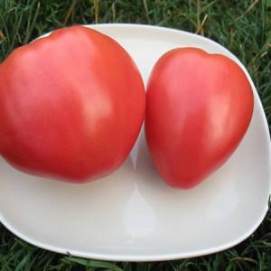 Tomato, Beefsteak - German Oxheart