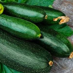 Zucchini - Dark Green | Organic |