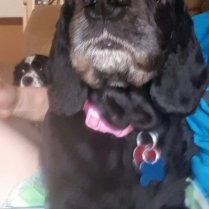 ADOPTED - CeCe is about 7 years old, up to date on her vaccines, and is spayed. She is ready to find her forever home!