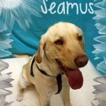 SEAMUS was adopted and found a wonderful family to go spend his life with. A boy to take him on walks and hikes ...and a family to love him forever!!