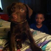 ADOPTED! Dusty is a 13 week old Lab mix. Available Feb 13