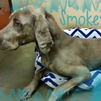 Smokey - Adopted