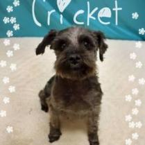 Cricket - ADOPTED!