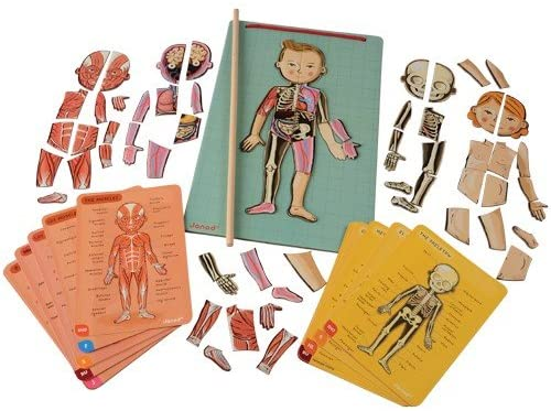 magnetic human body puzzle