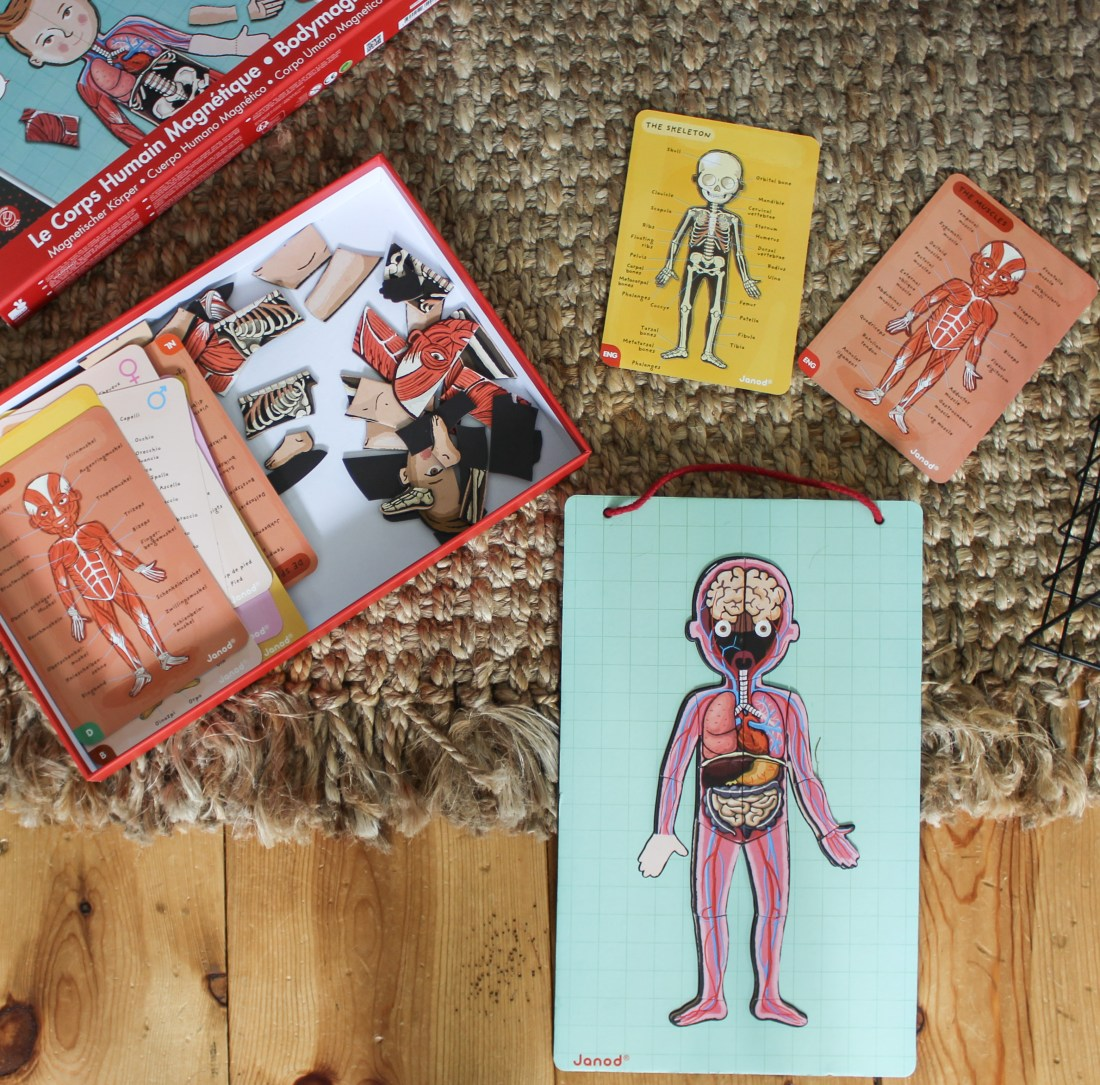 magnetic human body puzzles