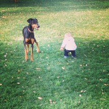 """Throwing the ball to the """"puppy"""""""
