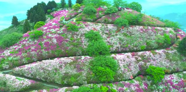 大洲の冨士山公園、今年はの車両進入を禁止しているらしい。