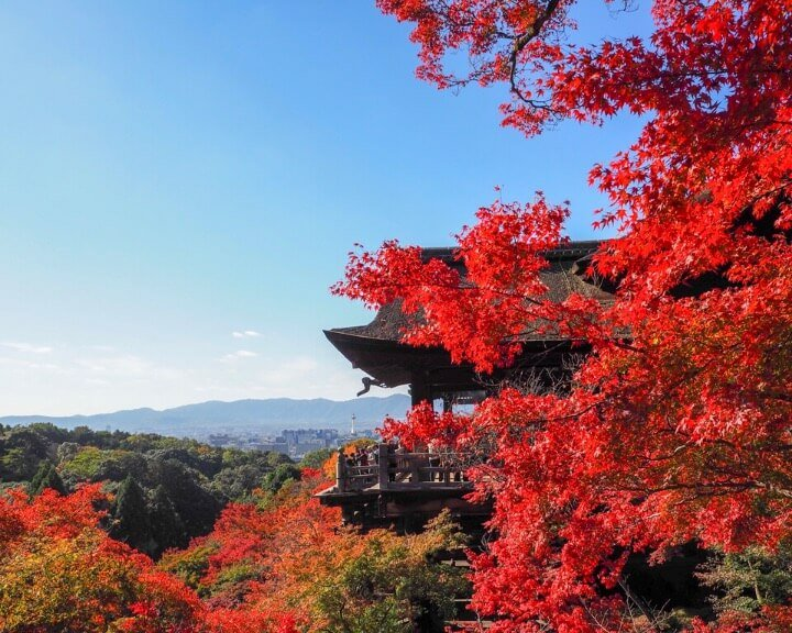 Beautiful red autumn leaves abound at Kiyomizu-Dera, Kyoto, Japan.