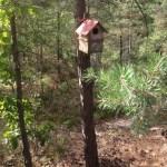 skog i ur och skur alvik