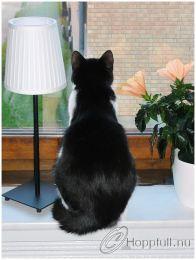 Saga spanar ut genom köksfönstret.