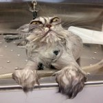 """20 x Grumpy Cats"""