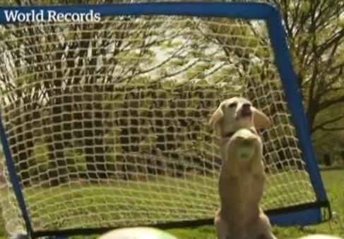 Dog Breaks Record