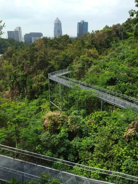 Forest Walk at Telok Blangah Park